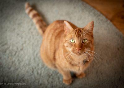 Fotografie Katten